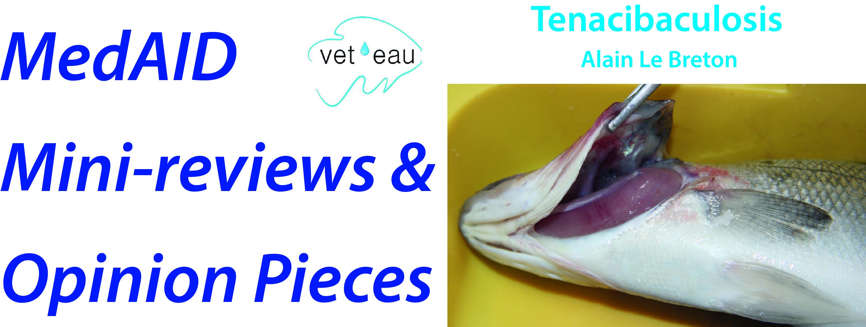 Tenacibaculosis in marine fish – Medaid Mediterranean